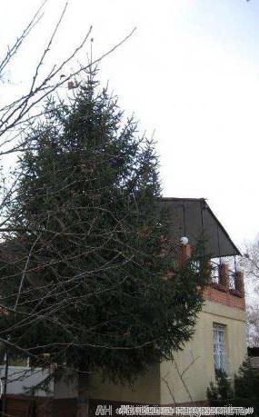 Фото 4 - Продам дом Киев, Богатырская ул.